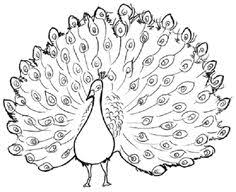 Small Picture Realistic Peacock Coloring Page Free Printable Peacock Coloring