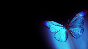 Laptop Wallpaper Butterfly