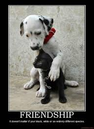 Quotes About Pets And Friendship Enchanting Quotes About Pets And Friendship Endearing Dog And Cat Friendship
