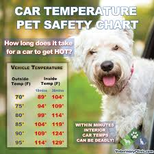 Vehicle Temperature Pet Safety Chart Visual Ly