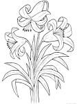 Раскраска лилия картинки