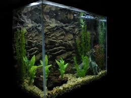 Fish Tank 25 Aquarium Backgrounds Wallpapers Freecreatives