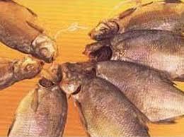 Технология вяления и сушки рыбы Сушка пищевых продуктов Технология вяления и сушки рыбы