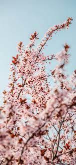 white cherry blossom tree during ...