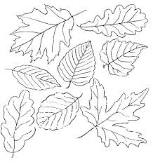 coloring pages leaf coloring template leaves pages with names fall interesting about remodel free colouring