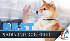 9 Best Shiba Inu Dog Foods Plus Top Brands For Puppies Seniors