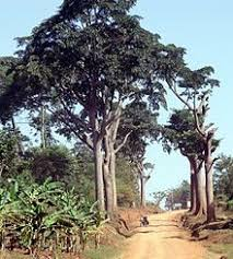14 Best WorldWide <b>Wood</b> - Cameroon images | <b>Tropical</b>, <b>African</b> art ...