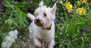 with the launch of dogs trust garden a dog s life the first ever dog friendly garden at rhs hampton court palace flower show dogs trust is reminding