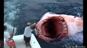 megalodon shark sightings 2015. Brilliant Megalodon Megalodon Shark Caught On Tape 2015  Epic New Year Monster Footage  YouTube With Sightings O