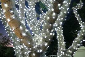 lighting outdoor trees. Trees With Lights Lighting Outdoor