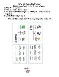 6 Kingdoms Of Life Characteristics 16x20 Anchor Chart
