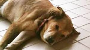 dogs are some of the greatest cutest and most loving s in the world fact they bring so much loyalty and love to our lives but unfortunately