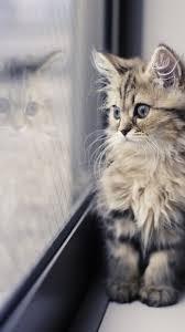 Cute Cat Wallpaper Iphone ...
