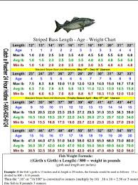 Northern Pike Age Chart Striped Bass Size Chart Weight Charts Chart Bass