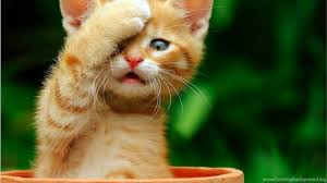 cute cats wallpapers free download. Plain Wallpapers Mobile  Throughout Cute Cats Wallpapers Free Download P