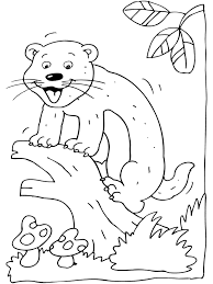 Ferret Coloring Page Animal Coloring Page Picgifscom