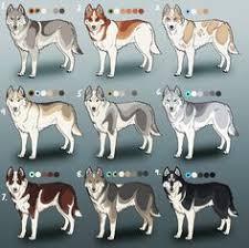 Husky Stock Chart 77 Best Husky Eyes Images Husky Husky Puppy Cute Dogs