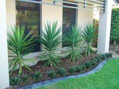 Small Picture yucca varieties western australia Google Search Mchomington