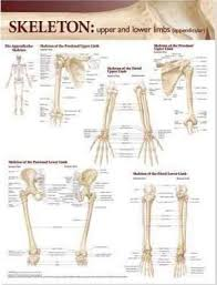 Lippincott Williams Wilkins Atlas Of Anatomy Skeletal