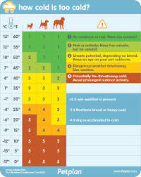 Dog Walking Chart Handy Chart Tells You When Its Too Cold To Walk Your Dog