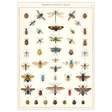 Insect Chart French Natural Science Poster