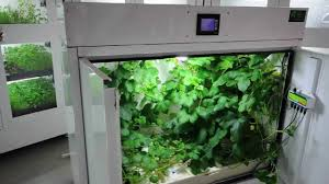 Hydroponic Grow Cabinet The Producer Grow Box For Large Yields Bcnl Youtube