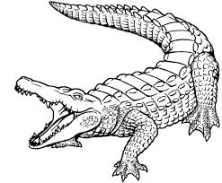 Small Picture Top 76 Crocodile Coloring Pages Free Coloring Page