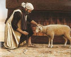 Image result for passover lamb image