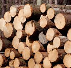 Sustainable Logging We Help Manage Our Forests For The Long Term