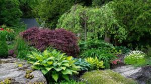 how to plant hostas in rock gardens