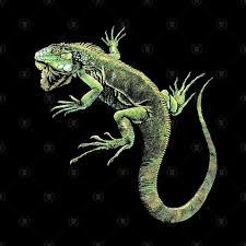 Green Iguana V3