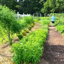 a beautiful vegetable garden the inn at little washington afterorangecounty com