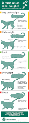 Cat Weight Chart Gallery Of Chart 2019