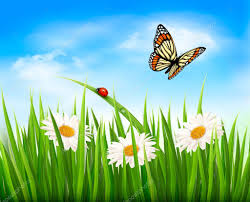 grass and flowers background.  Flowers Nature Background With Green Grass Flowers And A Butterfly Vec U2014 Stock  Vector In Grass And Flowers Background