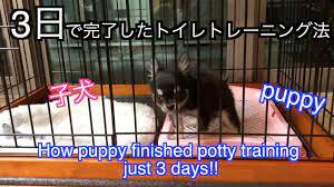子犬 トイレ の しつけ