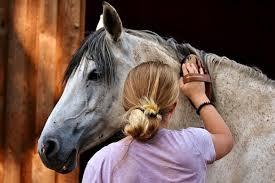 Doralies Pferdeblog Pferdesprache Sprechen Lernen