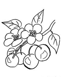 Small Picture Cherry Blossom Coloring Pages Luxury TI6 DebbieGeorgatos