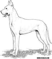 Small Picture Great Dane Coloring Page by YUCKLES