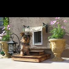 dog door ideas