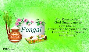 Image result for pongal wishes in hindi