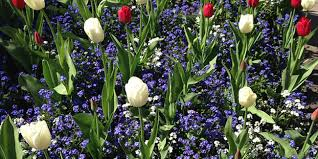 https://jardinage.lemonde.fr/images/dossiers/2016-07/mini/bulbes-vivaces-printemps-141335-650-325.jpg