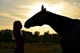 Afscheid Van Je Paard Alles Over Levensbeëindiging En Wat Daarbij