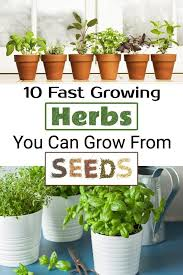 10 fast growing herbs you can grow from
