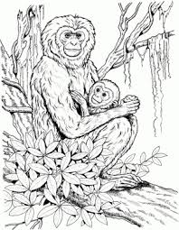 Small Picture Realistic Monkey Coloring Pages Coloring Coloring Pages