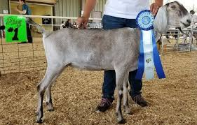 Openherd Lone Fox Farm Is A Registered Dairy Goat Farm