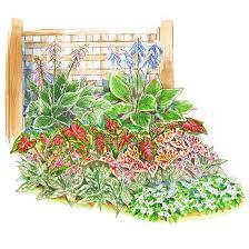 shade garden plants garden