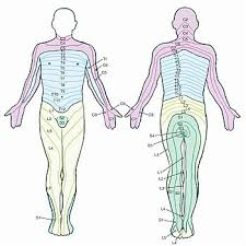 Back Nerve Chart Pin On Health