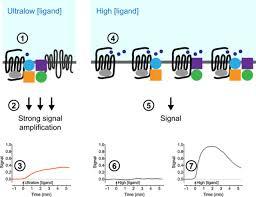 Gpcr Signaling Preassembled Gpcr Signaling Complexes Mediate Distinct