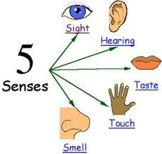 Sensory Details Anchor Chart Sensory Details Lessons Tes Teach