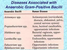 Gram Positive Bacilli Non Sporeforming Anaerobes Online Presentation